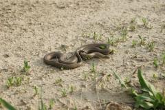 Змея - спутник археологов.