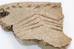 Орнаментированная-керамика-с-поселения