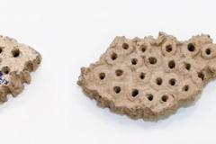 Фрагменты-керамической-сырницы
