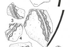Рис. 2. Рассказань VII. Раннеэнеолитическая керамика