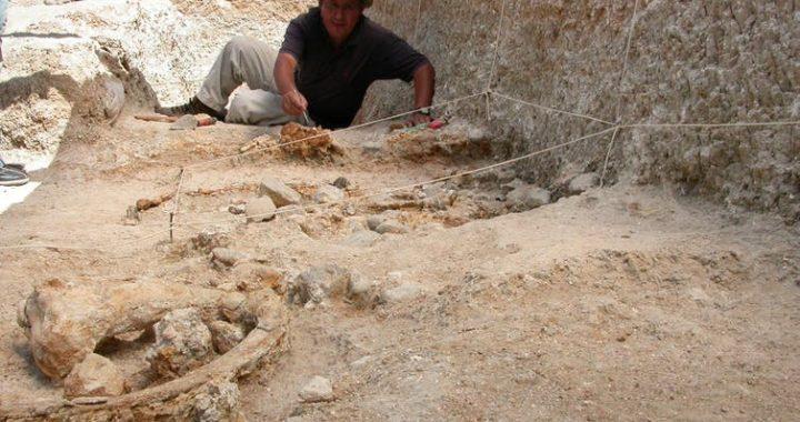 Восточная Африка всегда считалась «колыбелью человечества». Самые древние предки впервые применили именно здесь каменные инструменты.